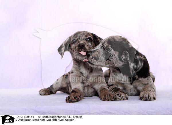Jh 20141 2 Australian Shepherd Labrador Mix Welpen Bilder Stockbilder Kaufen Professionell Tierfotoagentur Bildagentur Mit Spezialisierung Auf Tierbilder Und Tierfotos