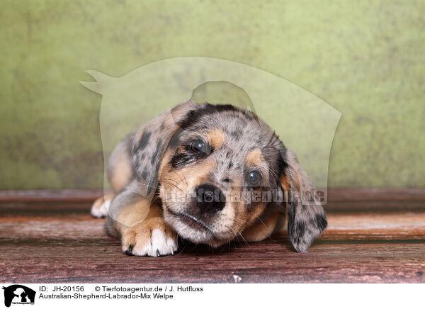 Jh 20156 Australian Shepherd Labrador Mix Welpe Bilder