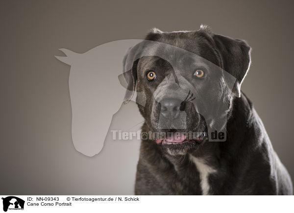 Cane Corso Portrait Nn 09343 Cane Corso Hunde