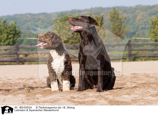 Bd 00524 Labrador Spanischer Wasserhund Bilder Stockbilder Kaufen Professionell Tierfotoagentur Bildagentur Mit Spezialisierung Auf Tierbilder Und Tierfotos