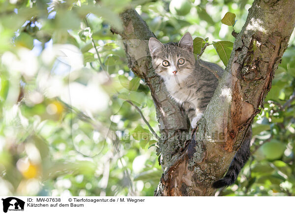 Kätzchen auf dem Baum / kitten on the tree / MW-07638