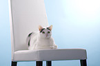 Hauskatze / domestic cat