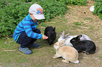 Kind füttert Kaninchen / child is feeding rabbits