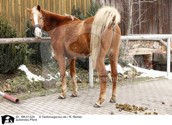 Krasses Pferd