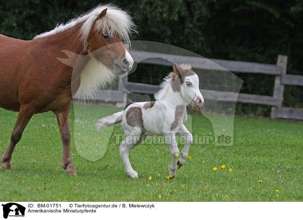Amerikanische Miniaturpferde