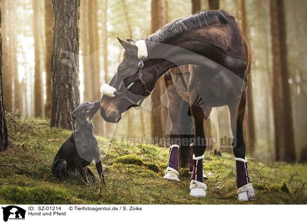 sz01214  hund und pferd bilder stockbilder kaufen