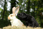 Tierfreunde / animal friends